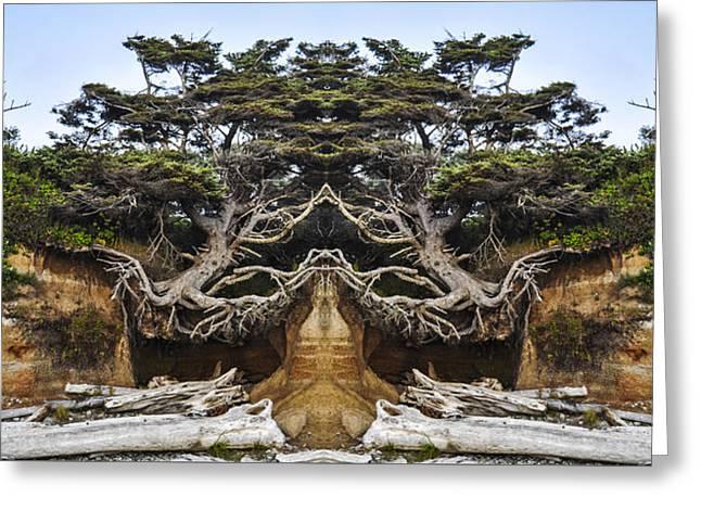 Meditating Tree Greeting Card by Pelo Blanco Photo