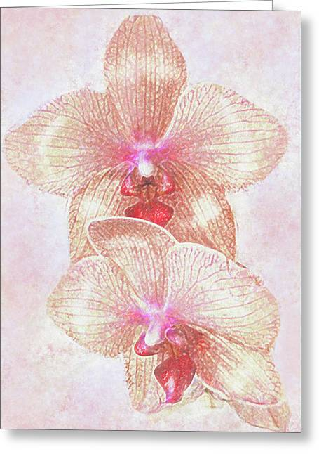 Kaleidoscope Orchid  Greeting Card by Jane Schnetlage