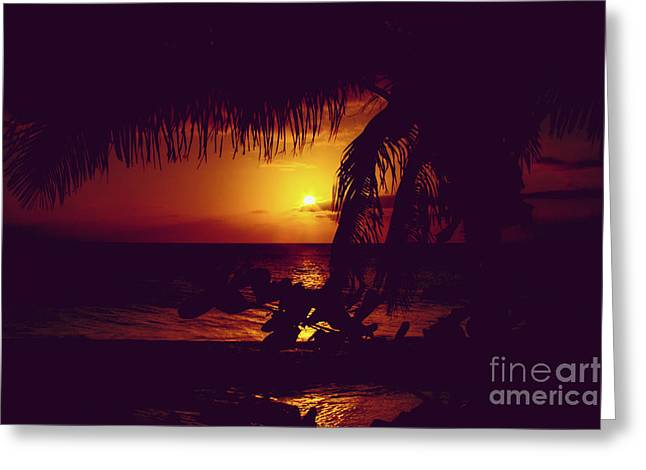 Kamaole Tropical Nights Sunset Gold Purple Palm Greeting Card by Sharon Mau