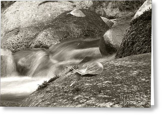 Kanaka Creek Bw Greeting Card by Sharon Talson