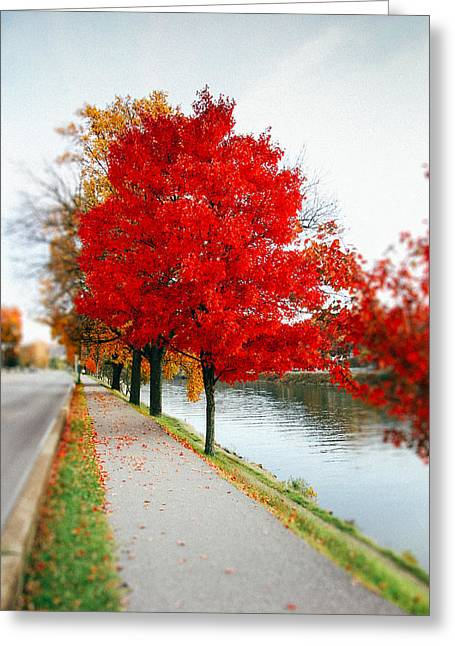 Kanawha Boulevard In Autumn Greeting Card