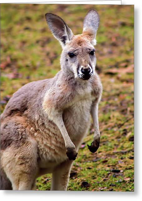 Kangaroo Greeting Card by Matt Steffen