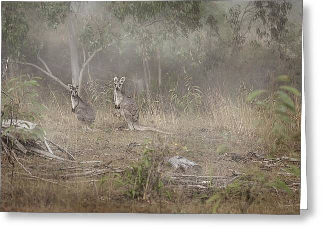 Kangaroos In The Mist Greeting Card