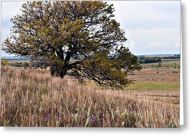 Kansas One Tree Hill Square Greeting Card