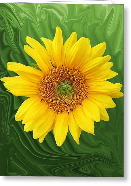 Kansas Sunflower Greeting Card by Jim  Darnall