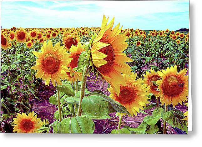 Kansas Sunflowers Greeting Card