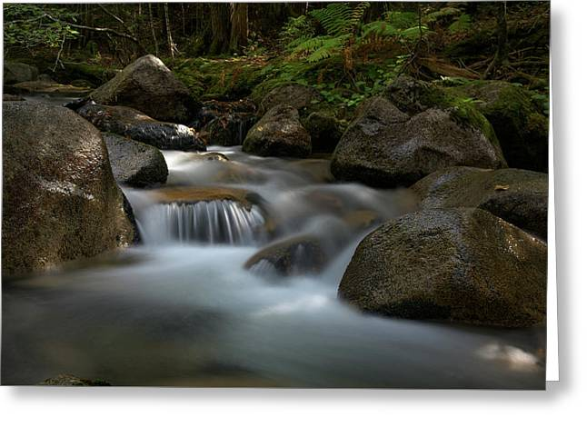 Katahdin Stream In The Shade Greeting Card
