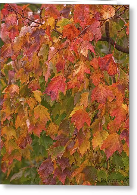 Kates Leaves Greeting Card by Michael Flood