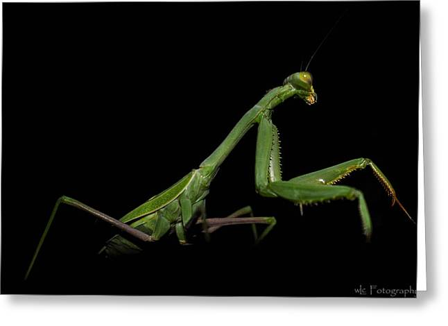 Katydid In Black Greeting Card
