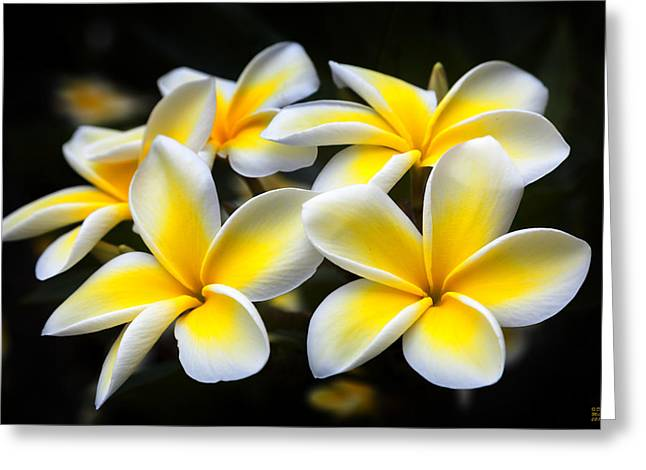 Greeting Card featuring the photograph Plumerias Canvas Print,photographic Print,art Print,framed Print,iphone Case,samsung Galaxy Case, by David Millenheft