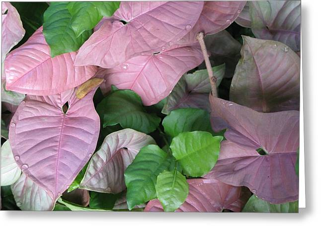 Greeting Card featuring the photograph Kauai  Pinks by Carol Sweetwood