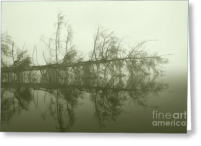 Greeting Card featuring the photograph Kayak Trap II by Jan Piller