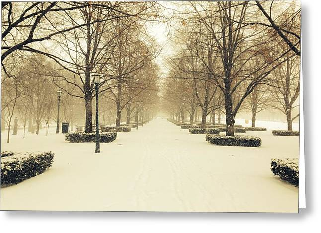 Kc Snow With Parisian Flare Greeting Card