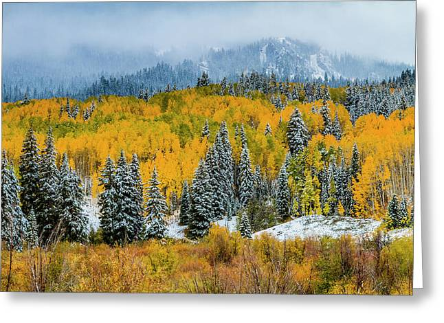 Kebler Pass Fall Color In The Snow Greeting Card by Teri Virbickis