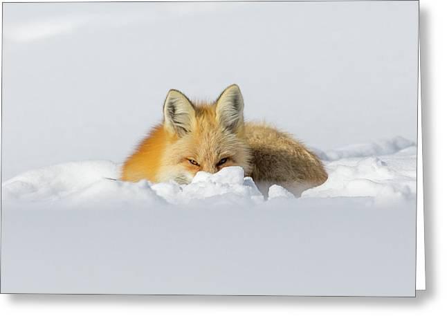 Snow Hide Greeting Card
