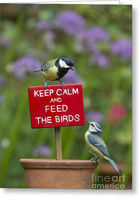 Keep Calm And Feed The Birds Greeting Card by Tim Gainey