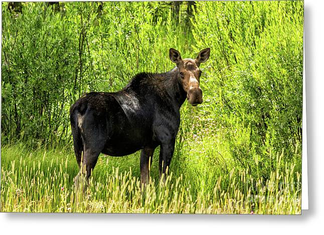 Keep Your Distance Wildlife Art By Kaylyn Franks Greeting Card