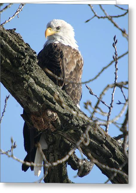 Keeping An Eye On Things Greeting Card by Dave Clark