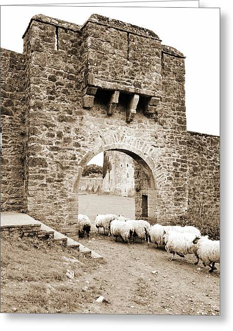 Kells Priory Ireland Sheep Using The Medieval Arched Gatehouse Entry County Kilkenny Sepia Greeting Card