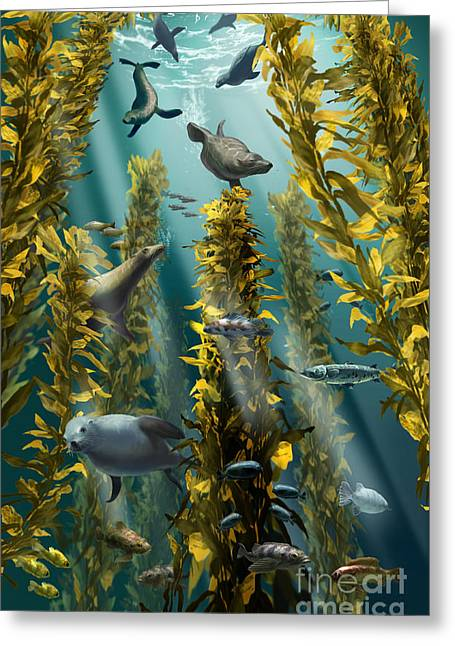 Kelp Forest With Seals Greeting Card by Jim Dowdalls