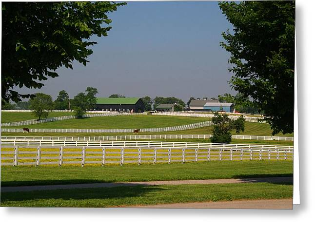 Kentucky Horse Park Greeting Card by Kathryn Meyer