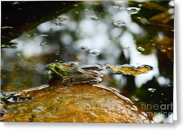 Kermit the frog greeting cards page 2 of 3 fine art america kermit the frog greeting card m4hsunfo