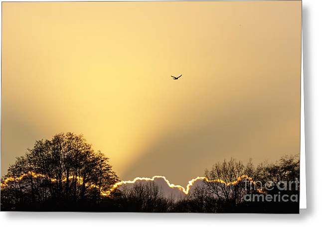 Kestrel Hunting At Sunset Greeting Card