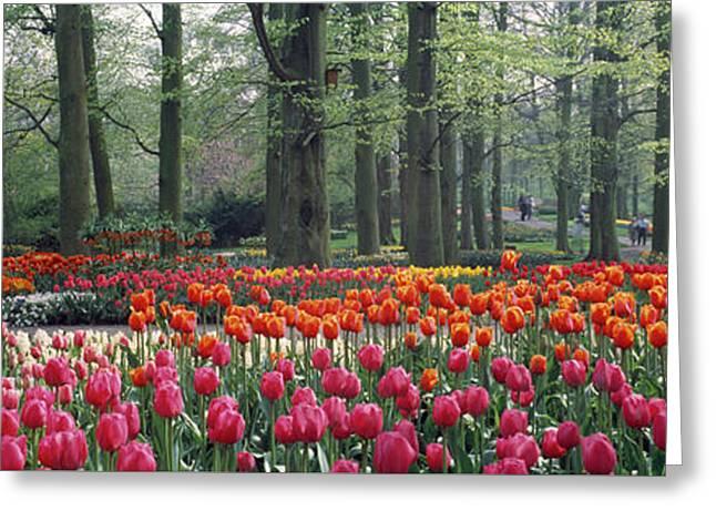Keukenhof Garden, Lisse, The Netherlands Greeting Card