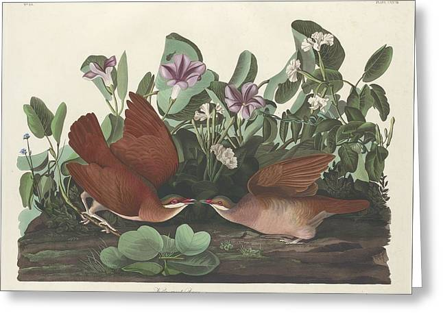 Key-west Dove Greeting Card