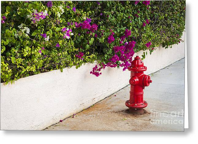 Key West Fire Hydrant Greeting Card by Elena Elisseeva