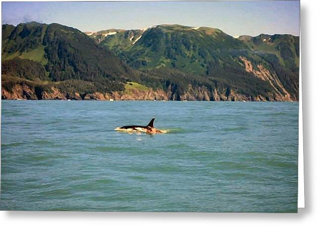 Killer Whale In Prince William Sound Greeting Card by Adam Owen