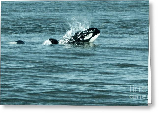 Greeting Card featuring the photograph Killer Whale by Wilko Van de Kamp