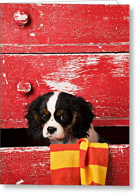 Cabinet Greeting Cards - King Charles Cavalier Puppy  Greeting Card by Garry Gay