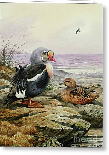 King Eider Greeting Card by Carl Donner