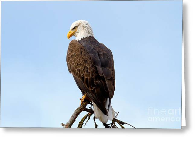 King Of Birds Greeting Card by Beve Brown-Clark Photography