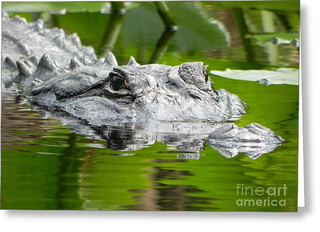 King Of The Florida Jungle Greeting Card by Jack Norton