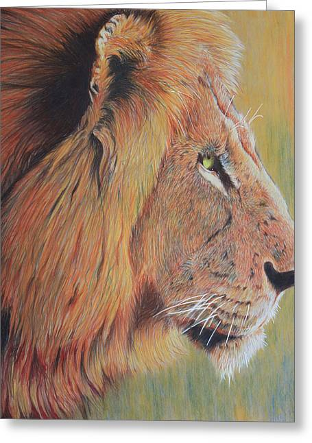 King Of The Jungle Greeting Card by Don MacCarthy