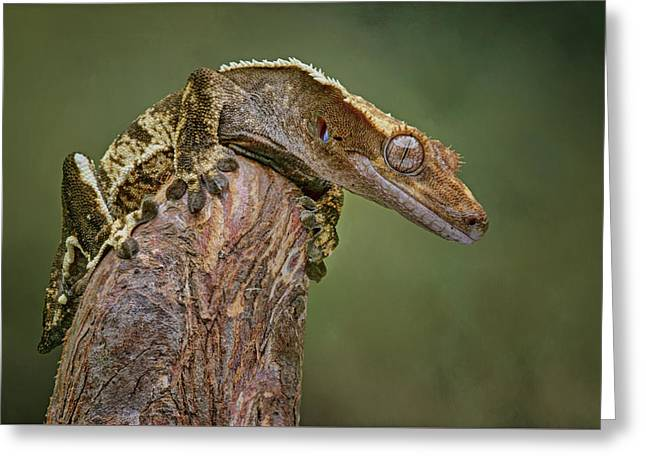 King Of The Mountain - Crested Gecko Greeting Card by Nikolyn McDonald