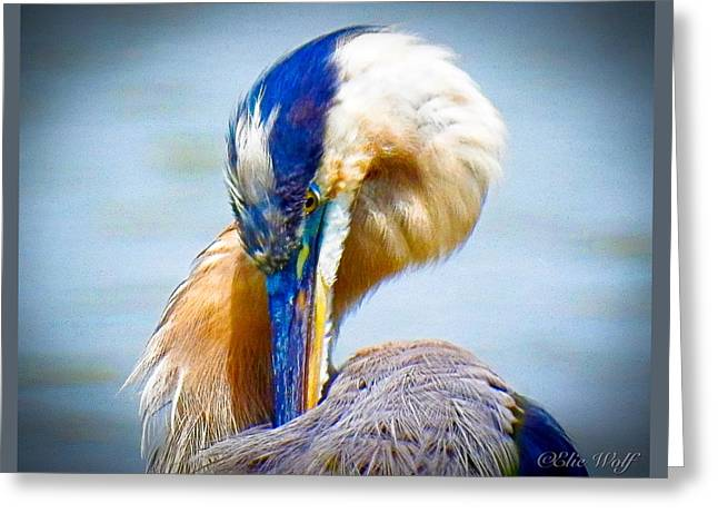 King Of The River Greeting Card