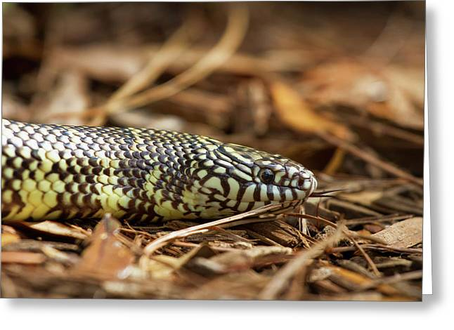 King Snake 1 Greeting Card