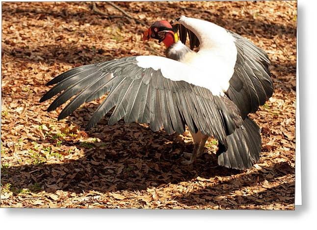 King Vulture 3 Strutting Greeting Card by Chris Flees