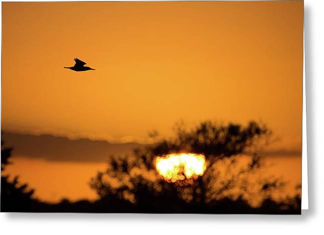 Kingfisher At Sunset Greeting Card