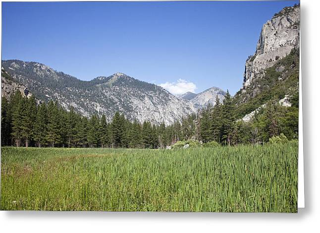 King's Meadow Greeting Card by Rick Pham