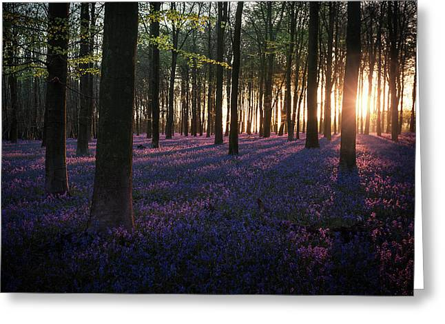 Kingswood Bluebells Sunrise Greeting Card by Ian Hufton