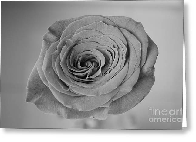 Kiss From A Rose On The Grey Greeting Card by Eva Maria Nova