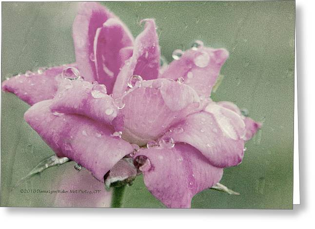 Kissed By The Rain Greeting Card