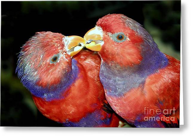 Kissing Birds Greeting Card by David Lee Thompson