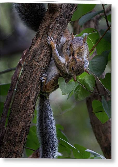 Kissing Squirrels Greeting Card