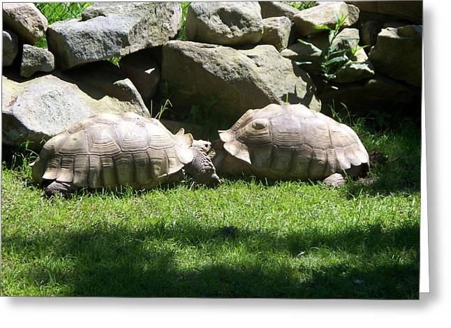 Kissing Tortoises Greeting Card by Rosanne Bartlett
