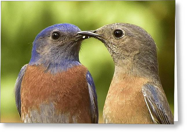 Kissy Face Closeup Greeting Card by Linda Brody